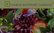 Plant Something Charlie Whitmore Gardens Easthampton
