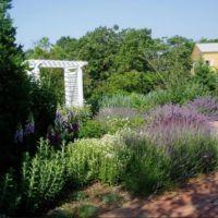 Charlie Whitmore Easthampton Perennial Garden
